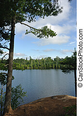 Pine Tree and Remote Wilderness Lake - Pine Tree on the...