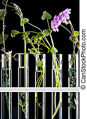 Flowers and plants in test tubes against a black background...