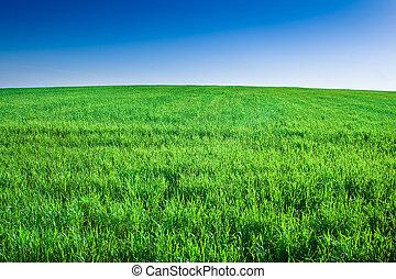 Green field of grass under blue sky