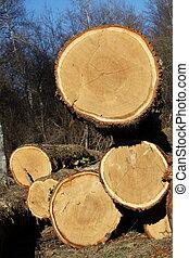 Logging Oak Trees