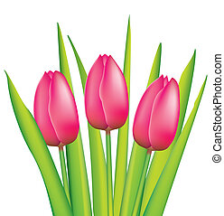 bunch of pink tulips - vector bunch of pink tulips