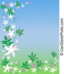 jasmine flowers - vector illustration of pink and white...