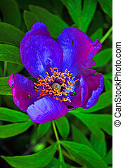 Blue Mountain flower surrounded by lush green vegetation and