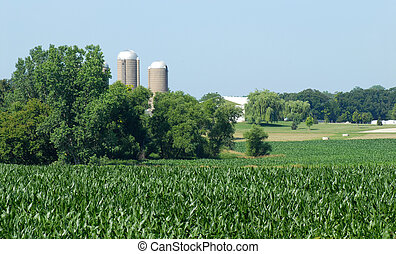 Rural cornfield with farm buildings in the background - A...