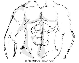 body building  - sketch drawing of body building