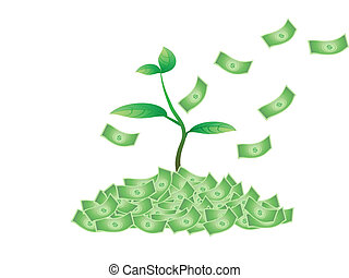 plant growing from the money