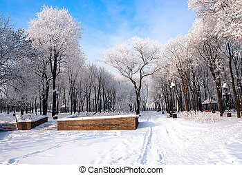 Beautiful frozen trees in the park Donetsk Ukraine