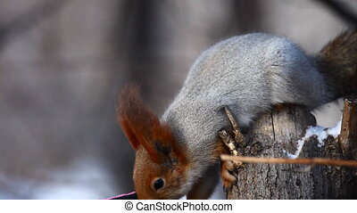 Squirrel eating sunflower seeds, which takes a hand