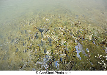 Polluted river bed