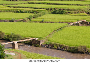 Paddy field terraces with small bridges and river in Madagascar