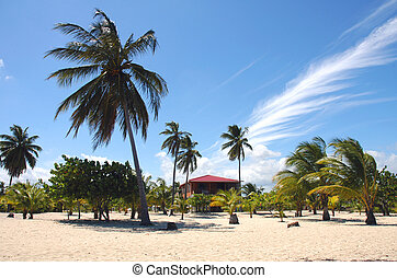 Belize, Placencia - Placencia, palm trees, beach, house in...
