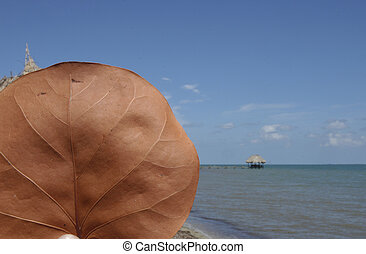 Belize, Placencia - close up of a brown leaf