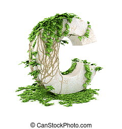 Ivy letter C isolated on white background.