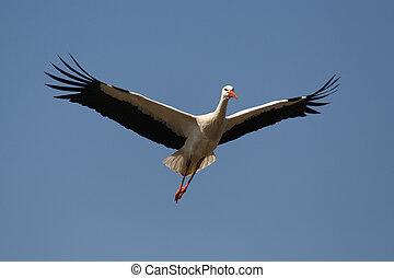 White Stork 3 - White Stork
