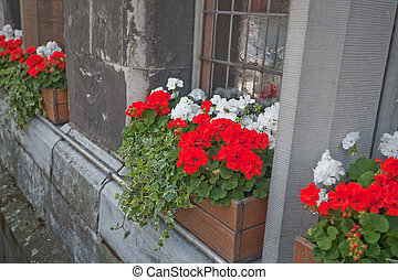 traditional geranium flower on windowsill in Germany