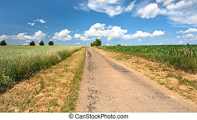 country road among corn and wheat fields in summer day
