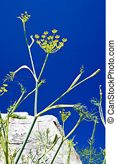 spidery on dill with blue sky on background