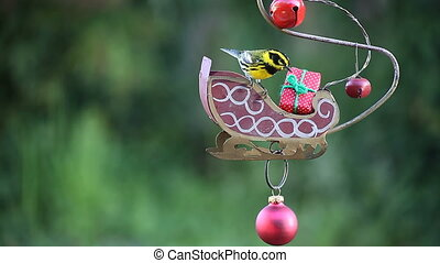 yellow bird in Christmas setting - a Townsends warbler gets...