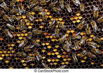 Bees - Many bees working on honeycombs full of honey and...