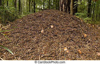 Anthill in the forest