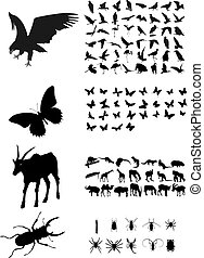 Many silhouettes of different animals, birds and insects -...