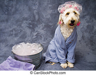 Bathtime Puppy - Portrait of puppy in bathrobe sitting along...