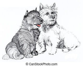 Scottie dogs - Two Scottie dogs illustration in pen and ink,...