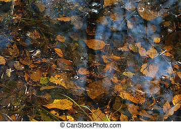 colorful leaves - Colorful leaves under the water