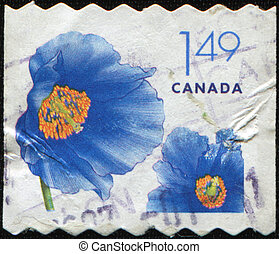 Himalayan blue poppy - CANADA - CIRCA 2005: A stamp printed...