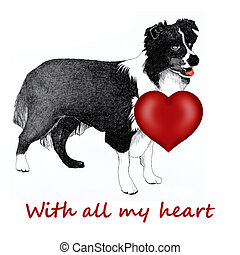 Collie dog with red heart - Collie dog with a red heart...