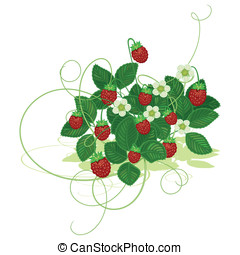 Wood wild strawberry - Bush of wild strawberry with berries...