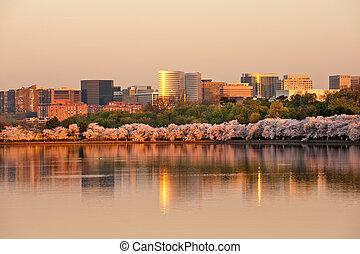 Rosslyn, VA - Skyscrapers of Rosslyn, VA with cherry blossom...