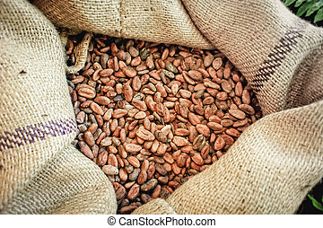 Cacao Beans in a Bag - Close up of a jute bag full with...