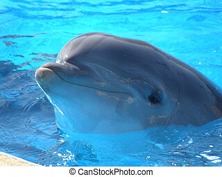 dolphin in a swiming pool