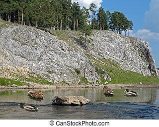 Wild ducks 5 - Wild ducks on a little mountain river