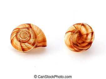Snail shells isolated on white