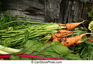 Garden carrots and swiss chard - Orange carrots and swiss...