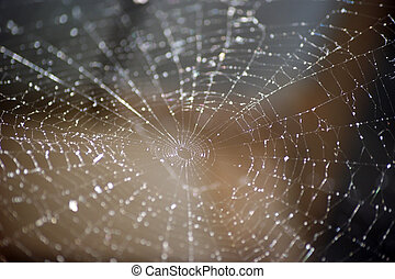 Spider Web Abstract - Abstract view of a spider web in...