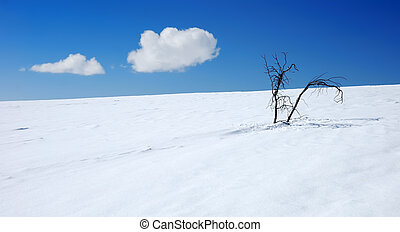 Two branch of weathered bush on the snow. Winter natural...