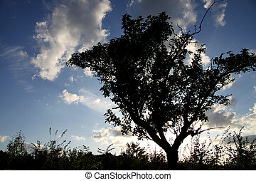 solitary tree before the evening sky - Individual trees...