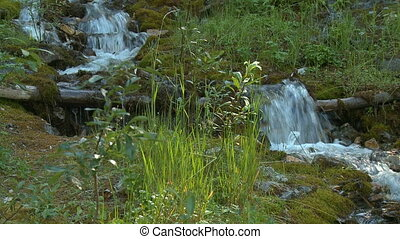 Small mountain stream - Small stream flowing on forest floor
