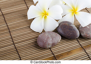 frangipani on stock of rocks