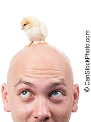 Chick - Image of bald male head with a small chick