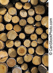 Stacked Firewood - Stacked Hardwood Firewood Drying Outdoors
