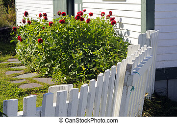 Cottage Garden - Red Flowers In A Cottage Garden With White...