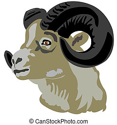 Head of the mountain ram - Portrait of the mountain ram on...