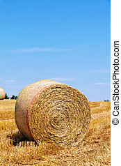 Agriculture. Field with bales of straw