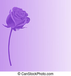 Single purple rose - Single red rose, I Love You, isolated...