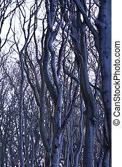 Wald - nienhagen
