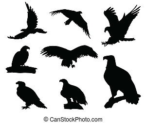 Eagle silhouettes - Various eagle silhouettes isolated on...